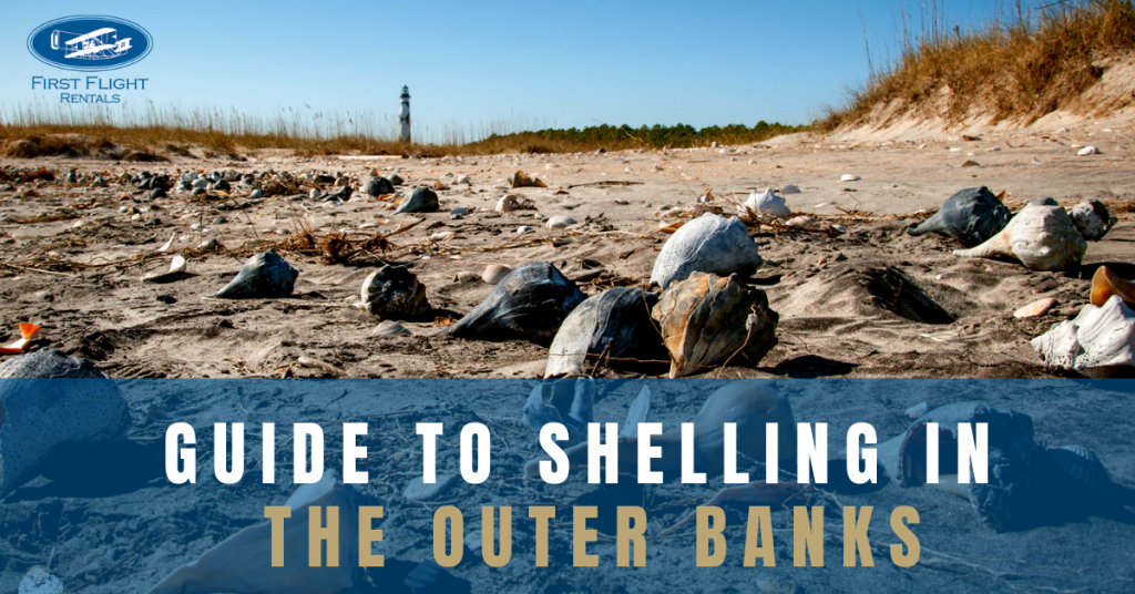 Guide To Shelling In The Outer Banks First Flight Rentals Blog